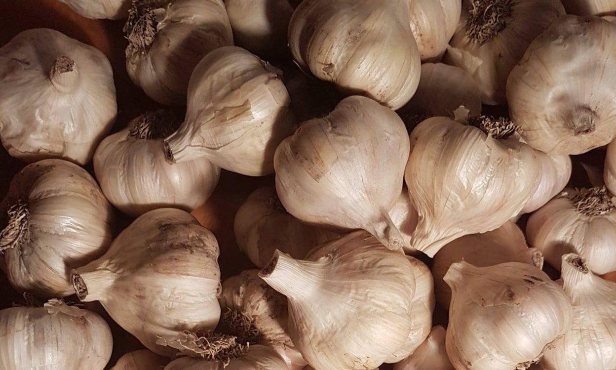 Blue Terrace Garlic